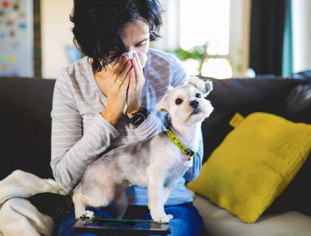 Kleiner Hund steht auf dem Schoß einer Frau, die sich die Nase putzt